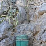 Aegiali-cactus
